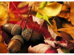 400_300_fototapeta_galeria-flash_jesiennie---zoledzie-wsrod-lisci-papierowe_200544